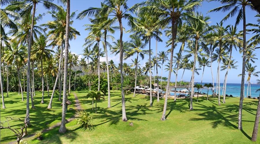 Palm Garden【イメージ】